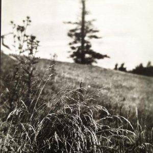 Josef Sudek – 6.1. Procházka po Mionši, 1968
