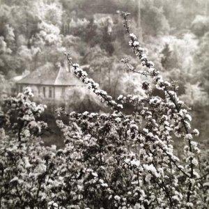 Josef Sudek – 9.1. Pohled na jaro z naší ulice, 1973