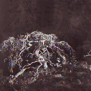 foto Karel Plicka – DEAD PINE IN THE ORLICE FOREST