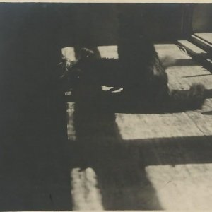 "František Drtikol –  ""Studie kočiček"""